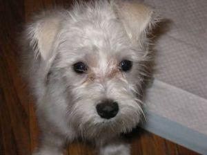 My puppy baby.